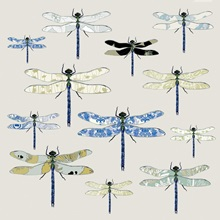 Odonata, 2008