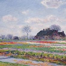 Tulip Fields at Sassenheim, near Leiden, 1886 (oil on canvas)