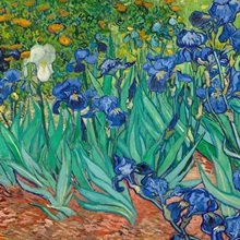 Irises By Vincent Van Gogh