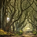http://static.greatbigcanvas.com/images/square/estock/northern-ireland-great-britain-ballymoney-dark-hedges,2429354.jpg?max=128