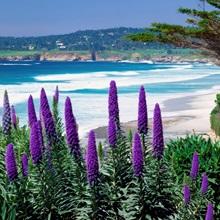 United States, California, Carmel, view towards Pebble Beach