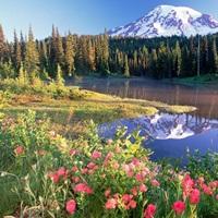 Mt Rainier and wildflowers at Reflection lake Mt Rainier National Park Washington