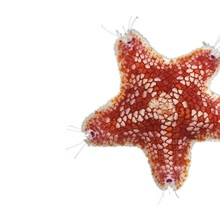 A sea starfish collected from a coral reef sample