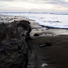 A washed up log up at Newport Beach, California