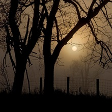Morning countryside silhouetted in dense early fog