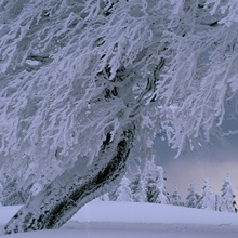 Snow-blanketed trees in winter landscapeSchau-ins-Land, Germany