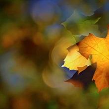 Fall Fantasy I