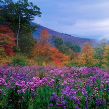 New Hampshire Meadow