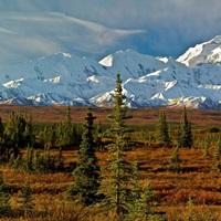 Autumn tundra and spruce trees, Mt McKinley, Denali National Park, Alaska