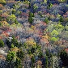 High angle view of Appalachian hardwood forest, Blue Ridge Parkway, spring, North Carolina