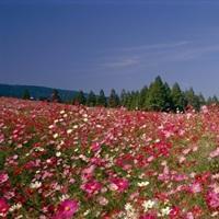 Ikoma Flowers Miyazaki Japan