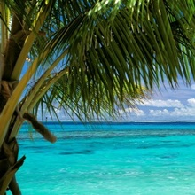 Palm tree on the beach, Huahine Island, Society Islands, French Polynesia