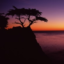 Silhouette of lone cypress tree on a cliff, 17 Mile Drive, Pebble Beach, Carmel, Monterey County, California,