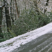 Snow covered road passing through a forest, Blue Ridge Mountains, Mount Mitchell, North Carolina