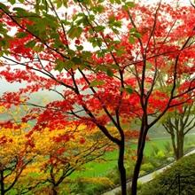 Trees along a garden path, Victoria, Vancouver Island, British Columbia, Canada