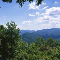 Trees in a forest with mountains in the background, Cherohala Skyway, North Carolina Highway 143, Nantahala National Forest, North Carolina