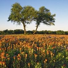 Trees In Field Of Blooming Wildflowers