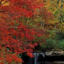 West Virginia, Glade Creek Grist Mill