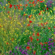 Wildflowers El Escorial Spain
