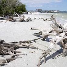 Driftwood on beach with fishing pier in background, Sanibel Island, Gulf Coast, Florida
