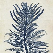 Indigo Blue Seaweed VI