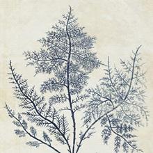 Indigo Blue Seaweed VIII