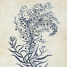 Indigo Blue Seaweed XI