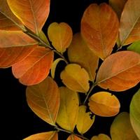 Vivid Leaves I