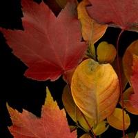Vivid Leaves IV