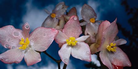 Orchid, Brazil