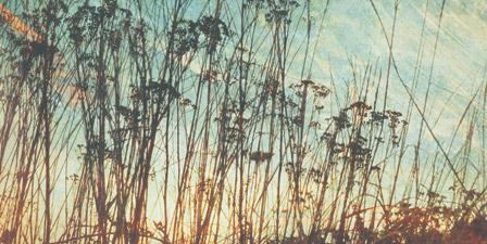 Wild Grass I