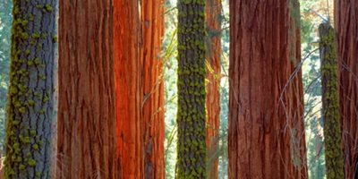 Sequoia National Park Wall Art Canvas Prints Sequoia National Park Panoramic Photos Posters Photography Wall Art Framed Prints Amp More Great Big Canvas