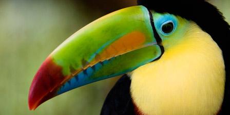 Tot Tours: Tropical Birds - NJMOM