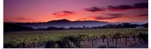 California, Napa Valley, vineyard