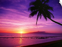 Hawaii, Maui, Olowalu, Palm Tree Silhouette At Sunset, Lanai In The Distance