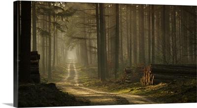 A Forest Walk