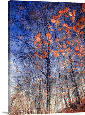 Autumn Leaves II