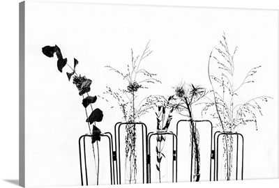 Black Flowers on White Background