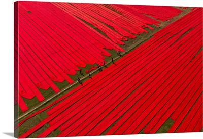 Childhood On Red Fabrics