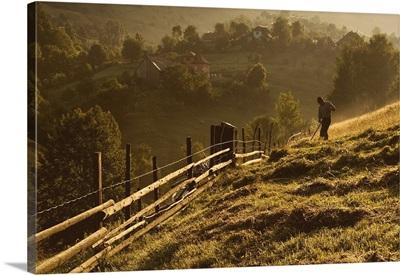 Cosasul Singuratic - The Lonely Harvester