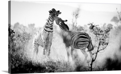 Fighting Stripes