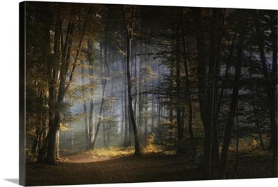 Forest Warmth