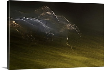 Gallop With Wind