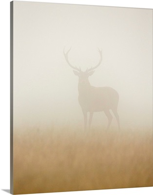 Ghost Stag