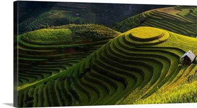 Gold rice terrace in mu cang chai, Vietnam