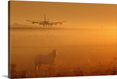 Horses and Planes