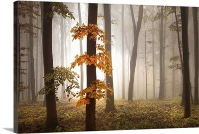In November Of Light