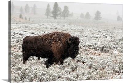 Late Fall Yellowstone