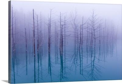 Misty Blue Pond