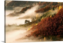 November's Fog